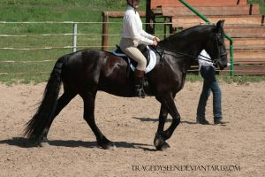 Friesian Stock 8 by tragedyseen