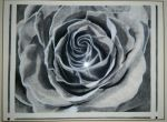 Charcoal Rose by sailingShipwrecks
