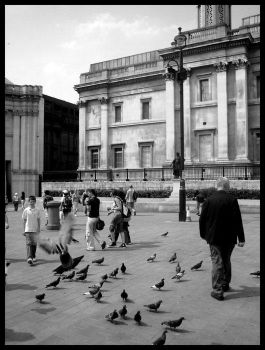 pigeons in london by Satyrion