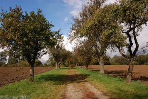 Apple Alley by Zouberi