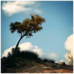 tree.let 2 by fr-ae-nk