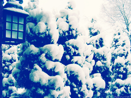 Cold Evergreen by puppyluv51015