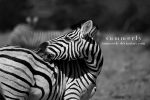 Namibia - XXII by Summerly