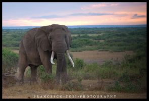 Kenya Wildlife 58 by francescotosi