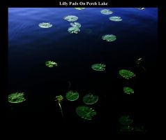 Lilly Pads on Perch Lake by AG88