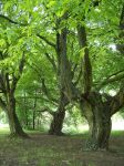 Trees 4 by Sed-rah-Stock