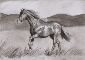 Horse by Lilma1