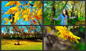 Autumn Colors by pictureofsound
