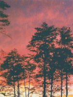 Trees in the sunset by Waterwolf11