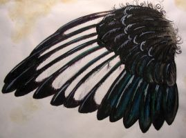 Magpie wing by kickass-peanut