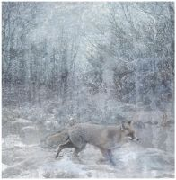 Fox in the Snow by emptyremains