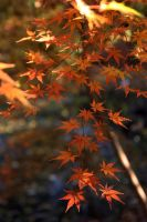 Autumn Color I by kucingitem