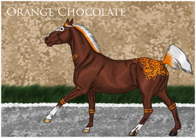 Orange Chocolate by Rosenhill