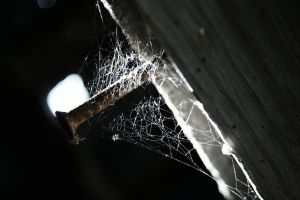 nail n webs by wolfmantruth