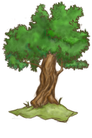 This is a tree by Sappu