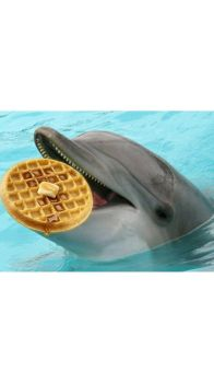 DOLPHER WAFFLE FOR ARGO by my-little-pop-artist