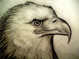 Eagle by boy140495
