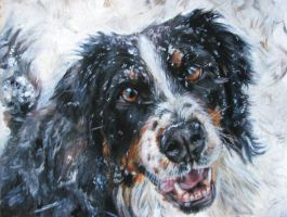 Bernese Mountain Dog by Katie-Z
