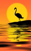 Flamingo at sunset by Nataly1st