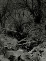 This disconsolate place... by wolfcreek50