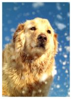 Snow Puppy by Revilis