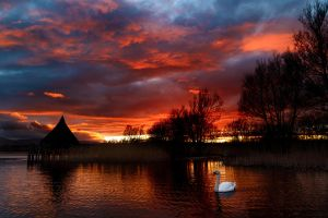Swan at Sunset by Spudgun