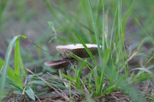 Fungus in Profile by Nocturneon