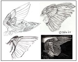 Wing studies by Reptangle