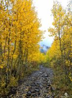 Leaf Covered Road by mjohanson
