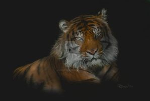 Majestic by concettasdesigns