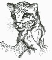 Leopard by Immortal-Wounds