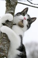 Tree hugger Kitty by SaNNaS