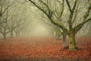 Orchards by StephaniTheArtist