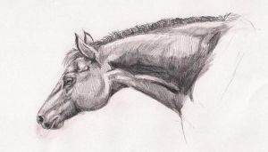 Horse In Pencil by stormhawk