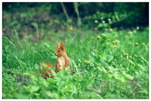 Squirrel II by IrisErelar