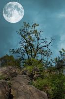 Premade Background 161 by FairieGoodMother