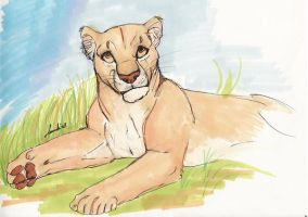 Lioness in Marker by Moolallingtons