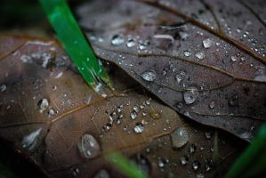 After rain by f0rtherec0rd