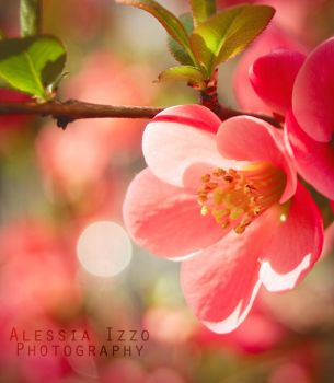 Pink glow by Alessia-Izzo