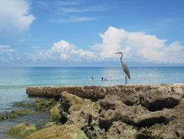 Coquina Beach - Heron 1 by Lauren-Lee