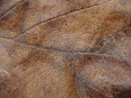 Texture- Natural 04 by texture-resources