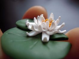 white water lily 1 by lily-inabottle