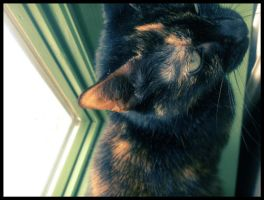 Chatte by Negeri