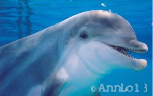 My favorite dolphin by annlo13