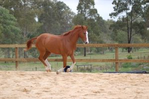 ASH break to canter legs toget by Chunga-Stock