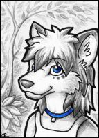 ACEO - Sharley by jrtracey