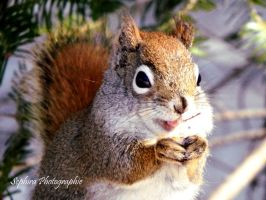 Squirrel - 3 by sephira1