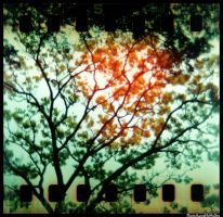 HOLGA 35mm series tree by aaronmcmullen