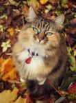 Elsie in Autumn by micromeg
