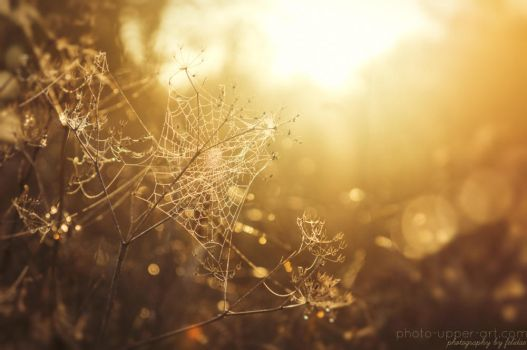The magic of a morning in autumn I by FeliDae84